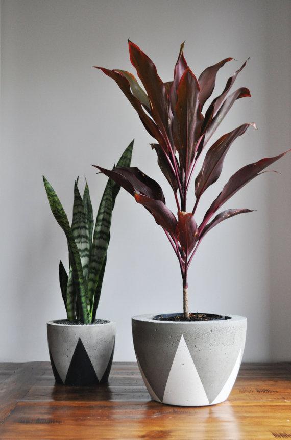 concrete planters, indoor plants, DIY
