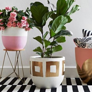 concrete planters, indoor plants, hunt and bo