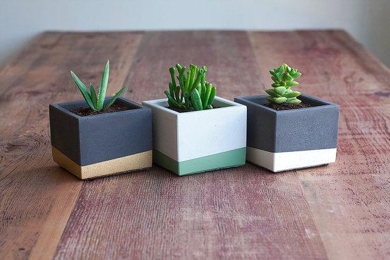 contrete planter, succulents, indoor plants