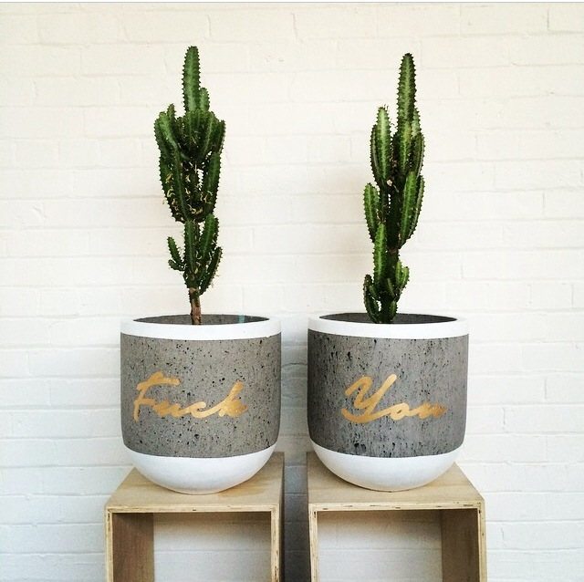 Concrete planters, cactus, DIY